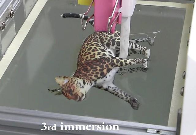 水圧転写で高精度な立体印刷を可能に