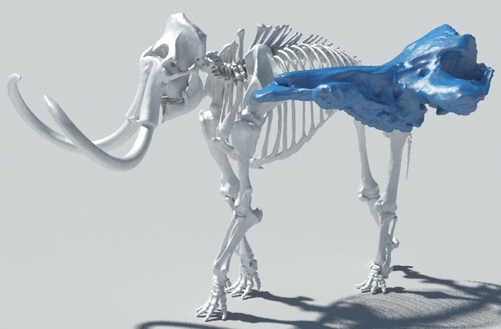 AfricanFossils_3