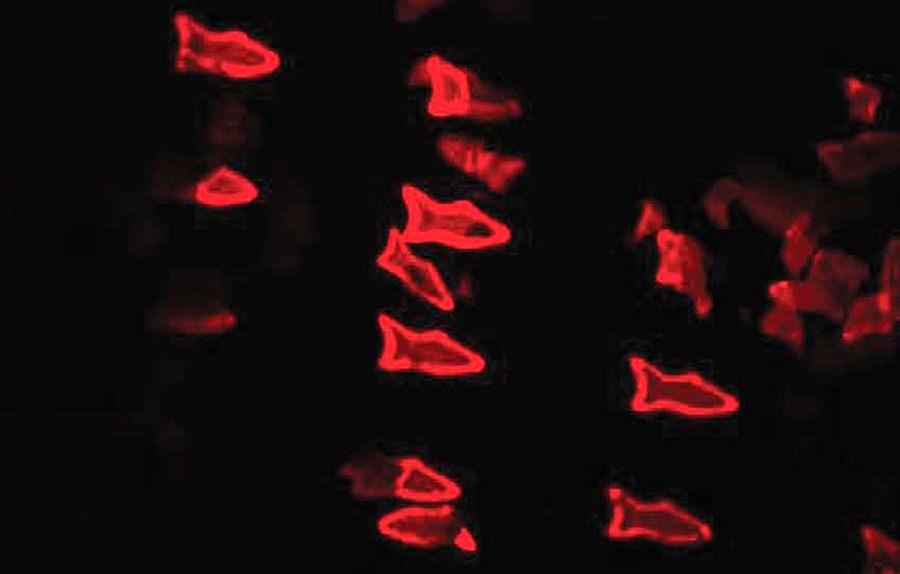 microfish-3d-print-1