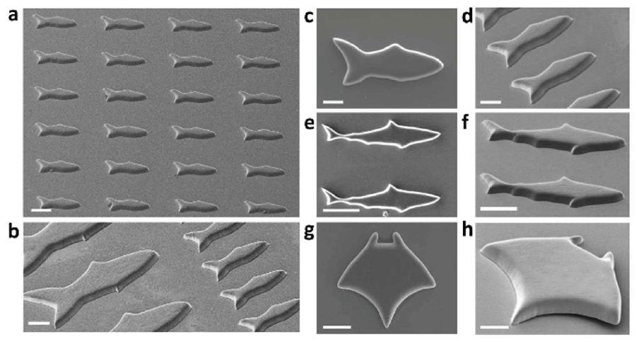 microfish-3d-print-4