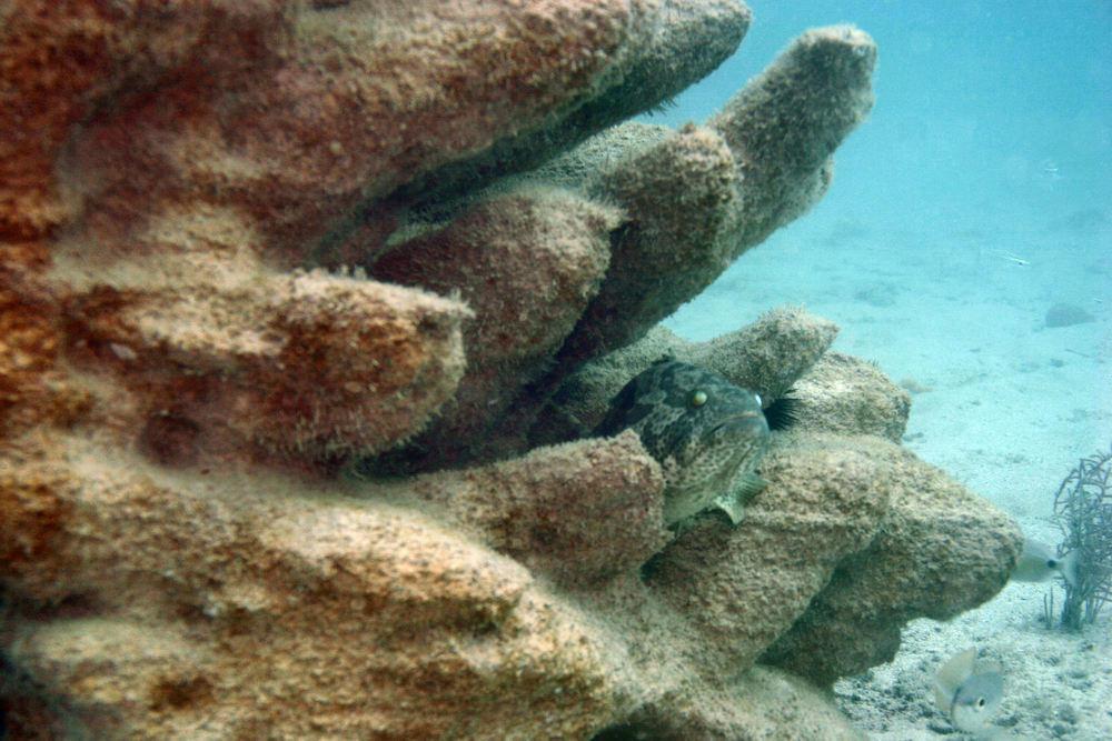 3D-Printed-Reefs-5