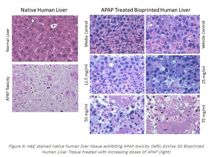 organovo-3d-liver-tissue-2