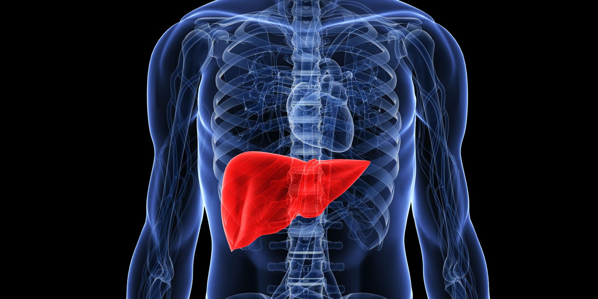 organovo-3d-liver-tissue-3